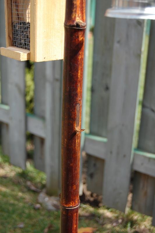 bird feeder fail