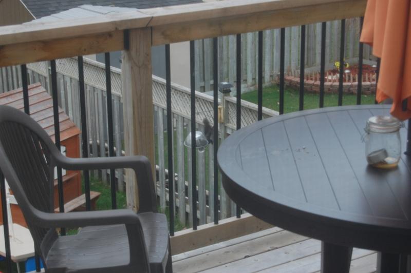 sneaky squirrels birdfeeder (3)