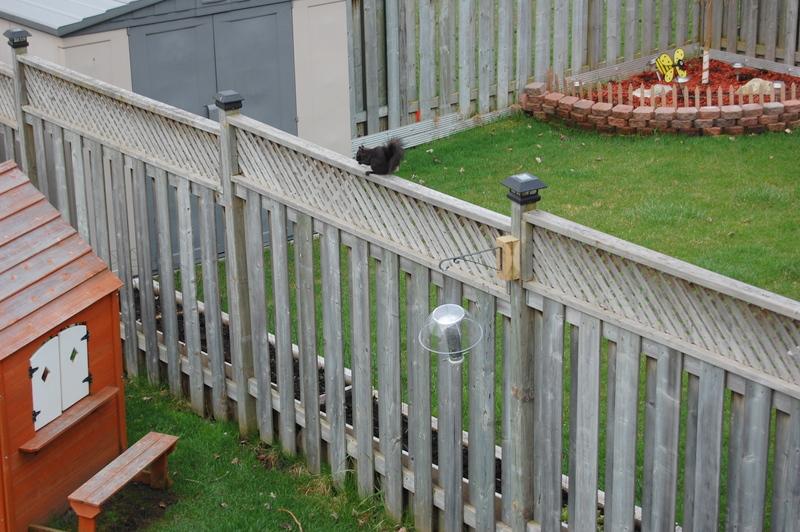 sneaky squirrels birdfeeder (4)