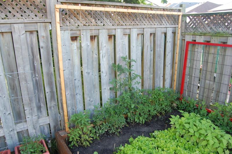 DIY tomato trellis