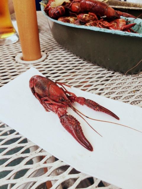 New Orleans Crawfish - northstory.ca
