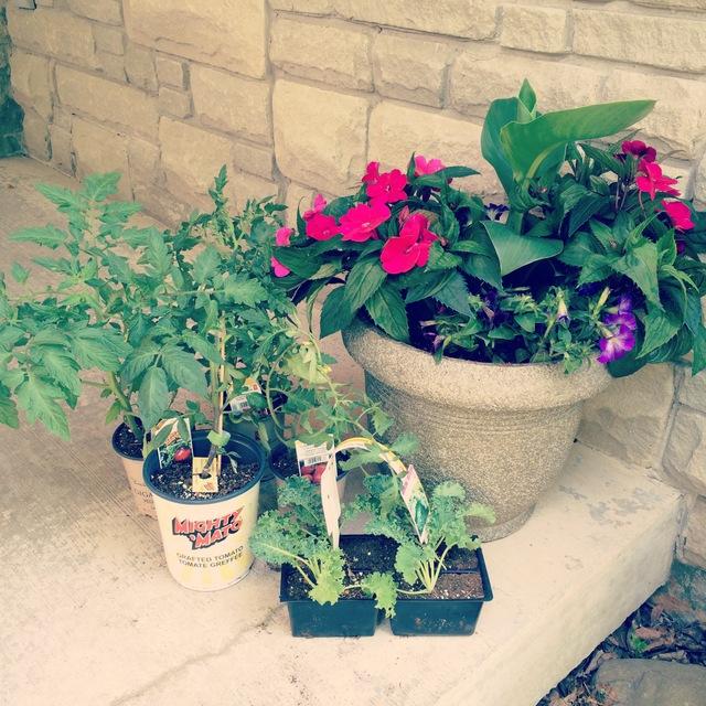Plants we took home - northstory.ca