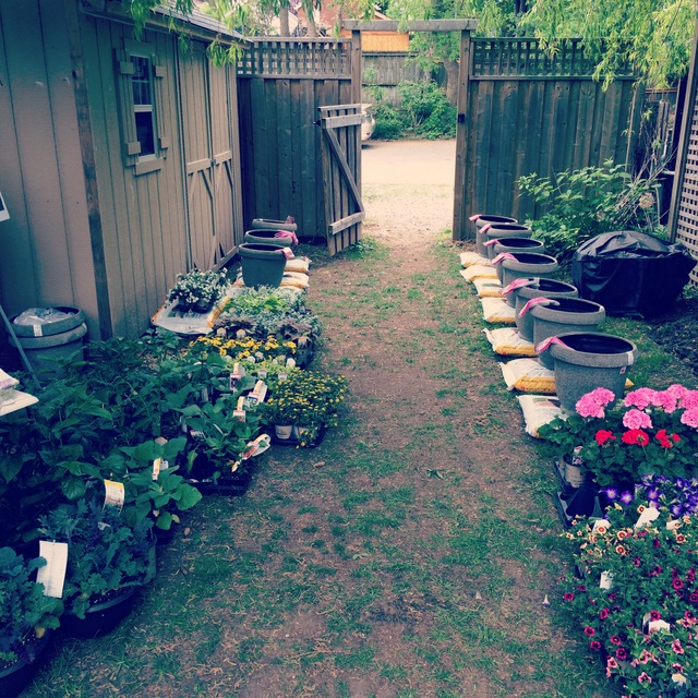 Ready to plant - northstory.ca