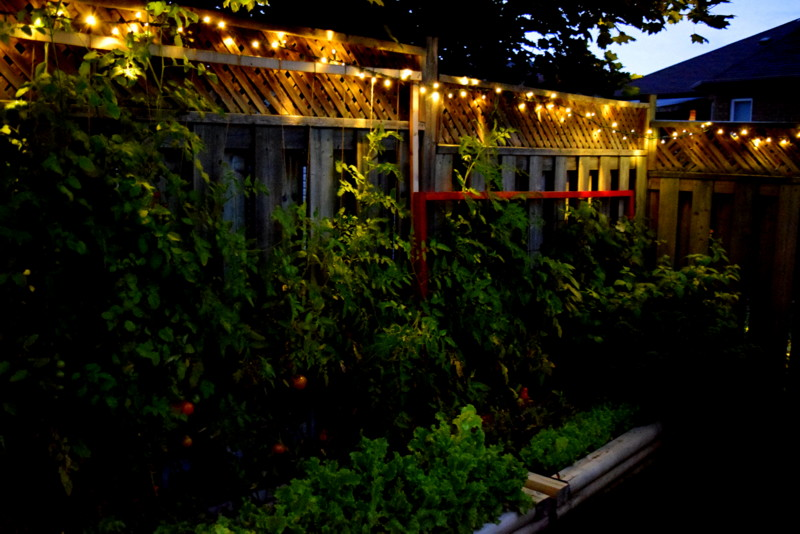 Garden at night - northstory.ca