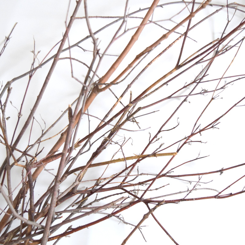 twig branches